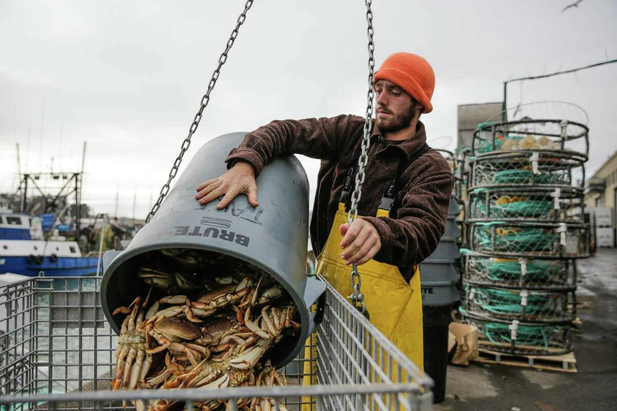 Fisherman Sam Jepson dumps freshly caught crab into a metal crate while unloading the first catch of the season, on Fisherman's Wharf, San Francisco, California, on Tuesday, Nov. 15, 2016.