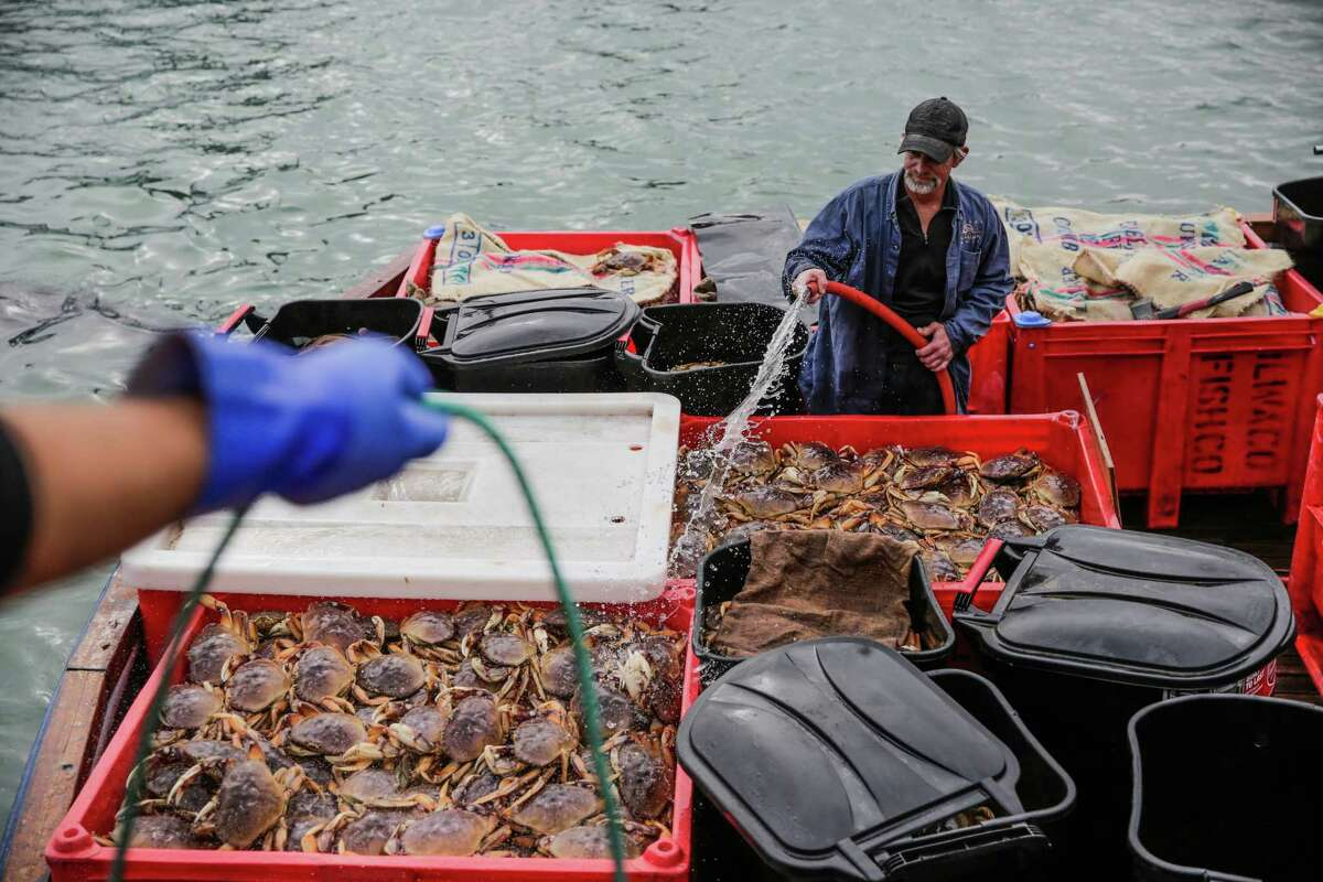 Fisherman Chris Javelos sprays water on crabs as he prepares to unload them from the New Easy Rider boat, at Pier 45 on Fisherman's Wharf, San Francisco, California, on Tuesday, Nov. 15, 2016.