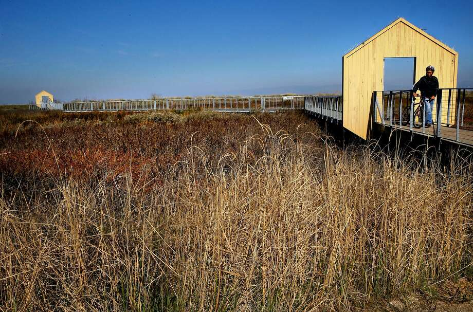 Boardwalks along the edge of the Alviso Salt Marsh restoration project allow visitors to enjoy the surrounding area on the edge of San Francisco Bay in Alviso. Photo: Michael Macor, The Chronicle