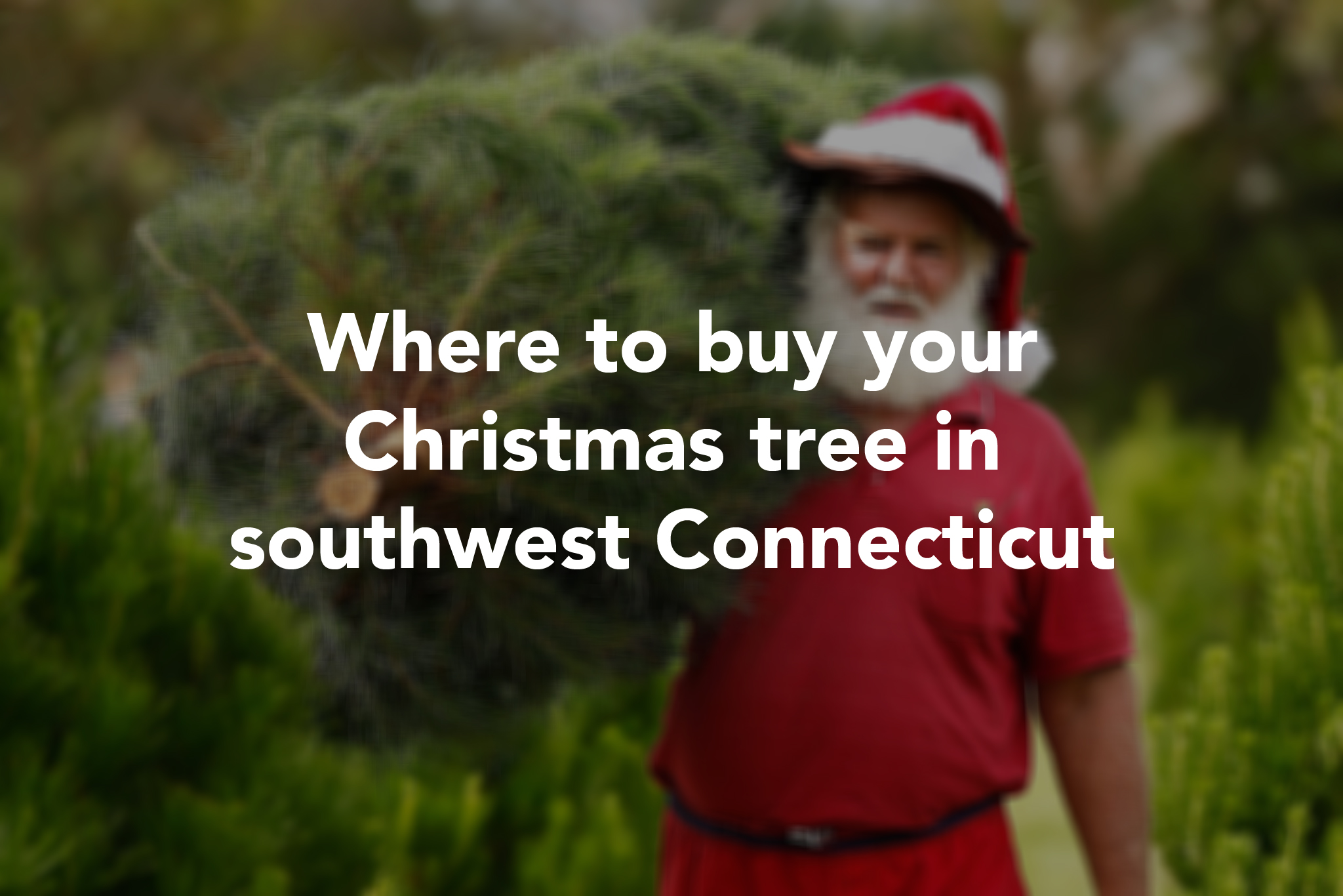 Connecticut Christmas Tree Farms