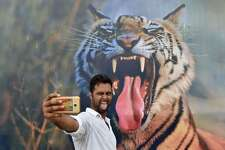 An Indian visitor poses for a photograph in front of a picture of a tiger displayed on the last day of the 'Bharat Parav' festival at the India Gate lawns in New Delhi on August 18, 2016.