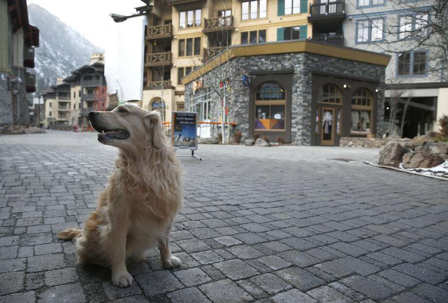 A dog hangs out in the village at Squaw Valley, Calif. on Wednesday, Nov. 16, 2016. The Placer County Board of Supervisors approved an ambitious expansion plan at the Squaw Valley ski resort. Photo: Paul Chinn, The Chronicle