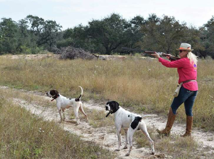 Locked onto a covey of wild bobwhites, Luke (front) and Diesel do their job of putting Debbie Houston of Sandy Oaks Ranch within wing-shooting range of some of the South Texas quail that are providing hunters with excellent shotgun action this year.