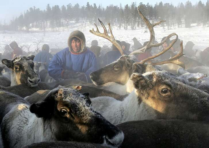 (FILES) This file photo taken on March 14, 2005 shows a Nenets herdsman gathering his reindeer as they prepare to leave a site outside the town of Nadym, 3,800 km North-East of Moscow in Siberia to find a new place for stay.  The loss of sea ice in the warming Arctic is threatening reindeer herding in northern Russia -- the livelihood of one of the region's last remaining nomad communities, researchers said on November 17, 2016. / AFP PHOTO / Tatyana MAKAYEVATATYANA MAKAYEVA/AFP/Getty Images