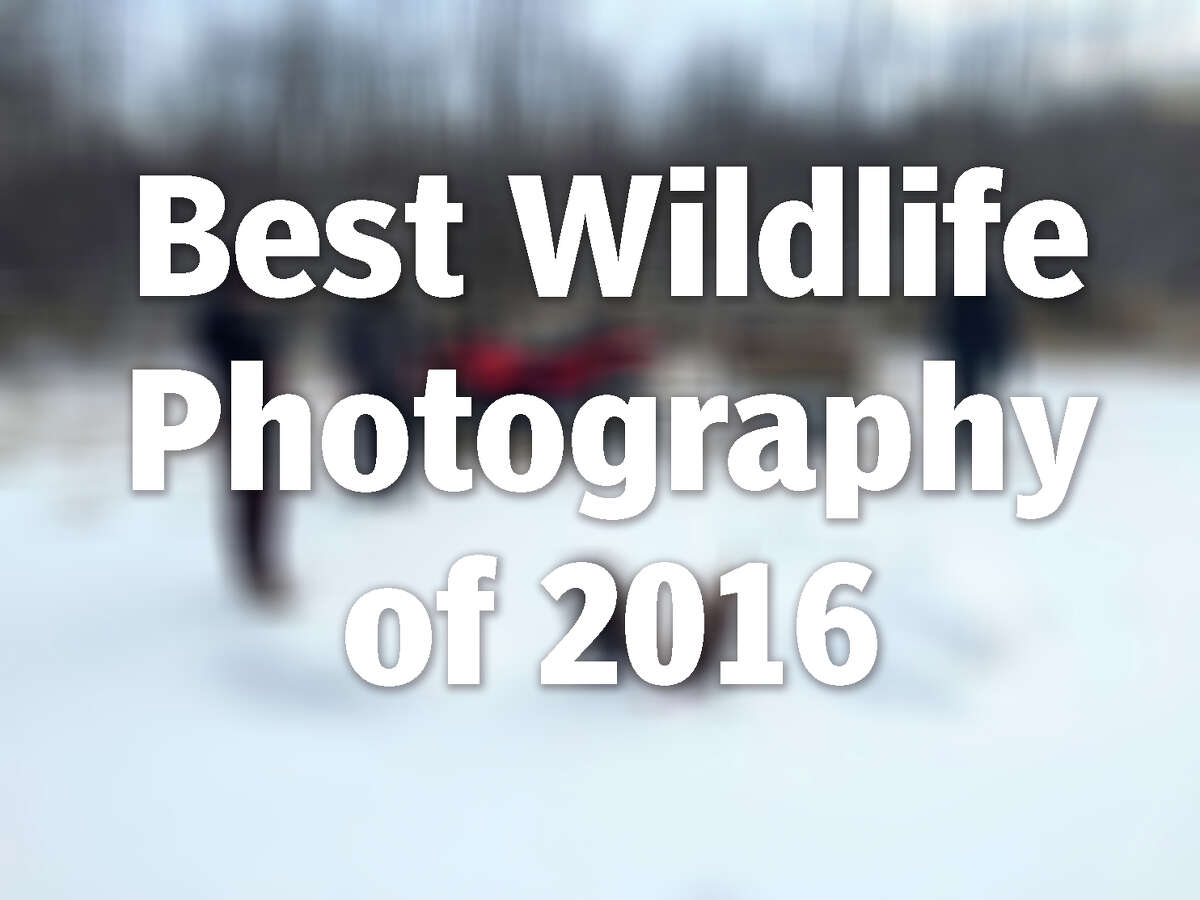 See some of the best photos of wildlife taken this year.