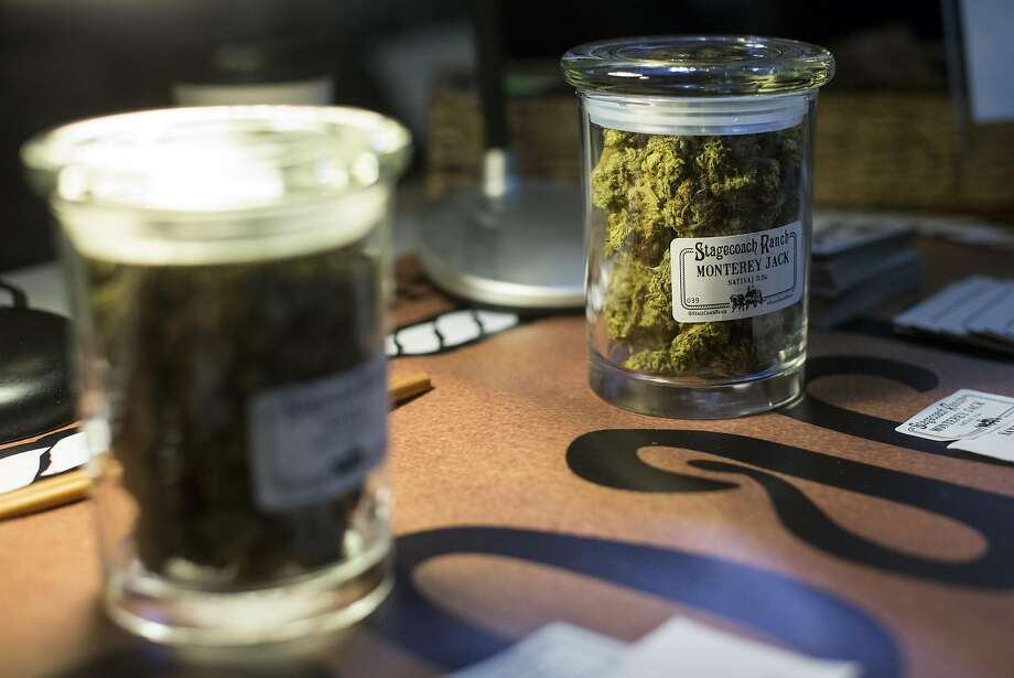 Cannabis from Stagecoach Ranch is seen on display during an event at Harvest, a medical marijuana dispensary in the Inner Richmond District, in San Francisco, Calif., on Saturday, November 19, 2016. Photo: Laura Morton, Special To The Chronicle