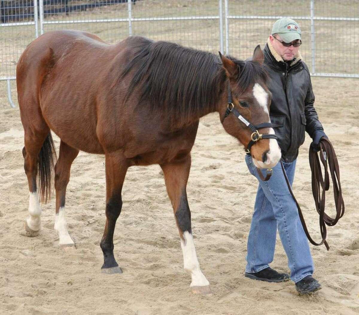 Lori Van Buren / Times Union Archive Army veteran Bill Bliss of Wilton bonds with a horse as part of Saratoga WarHorse program in Wilton.