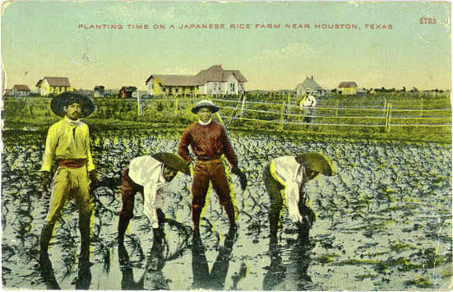 "An early 20th-century postcard: ""Planting time on a Japanese rice farm near Houston, Texas."" Photo: Archive"