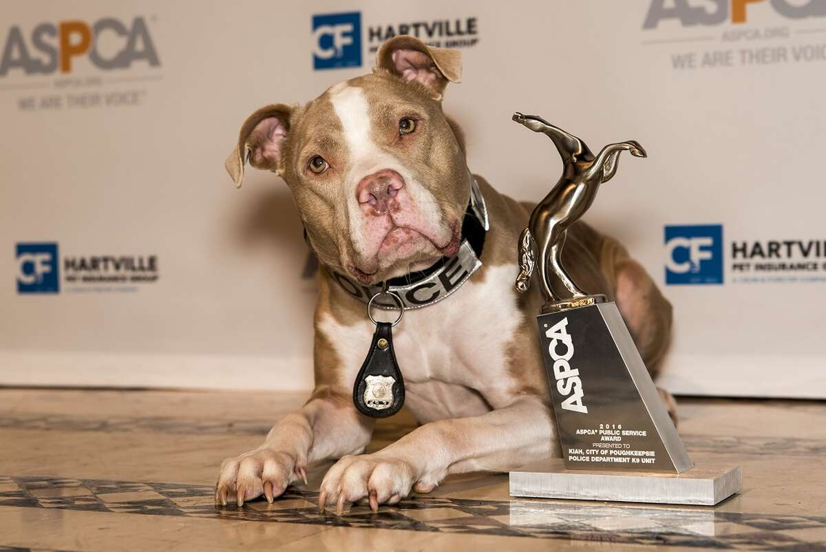 The American Society for the Prevention of Cruelty to Animals honored K9 Kiah as their 2016 Public Service Award recipient Thursday. (ASPCA)
