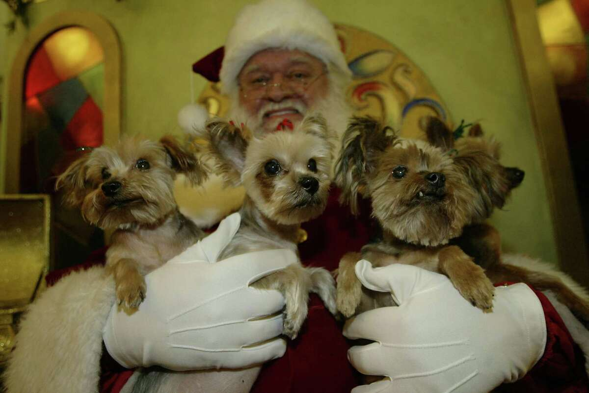 Santa has his hands full with four Yorkies. Pet picture night is Dec. 11 at the Galleria.