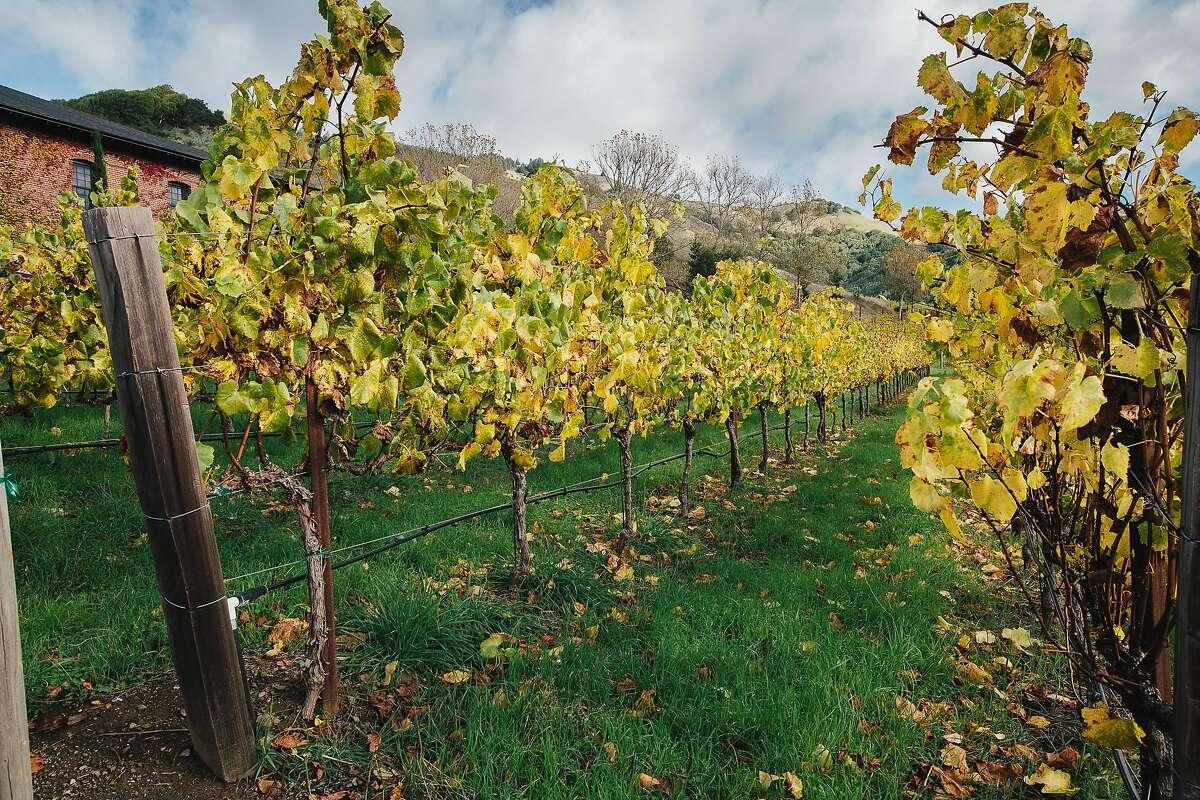 FILE - The vineyard at Skywalker Ranch on November 21, 2016.