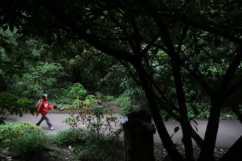 A park-goer walks in the Mesoamerican cloud forest October 24, 2013 at the San Francisco Botanical Garden. Photo: Leah Millis, The Chronicle