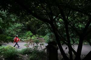 A park-goer walks in the Mesoamerican cloud forest October 24, 2013 at the San Francisco Botanical Garden.