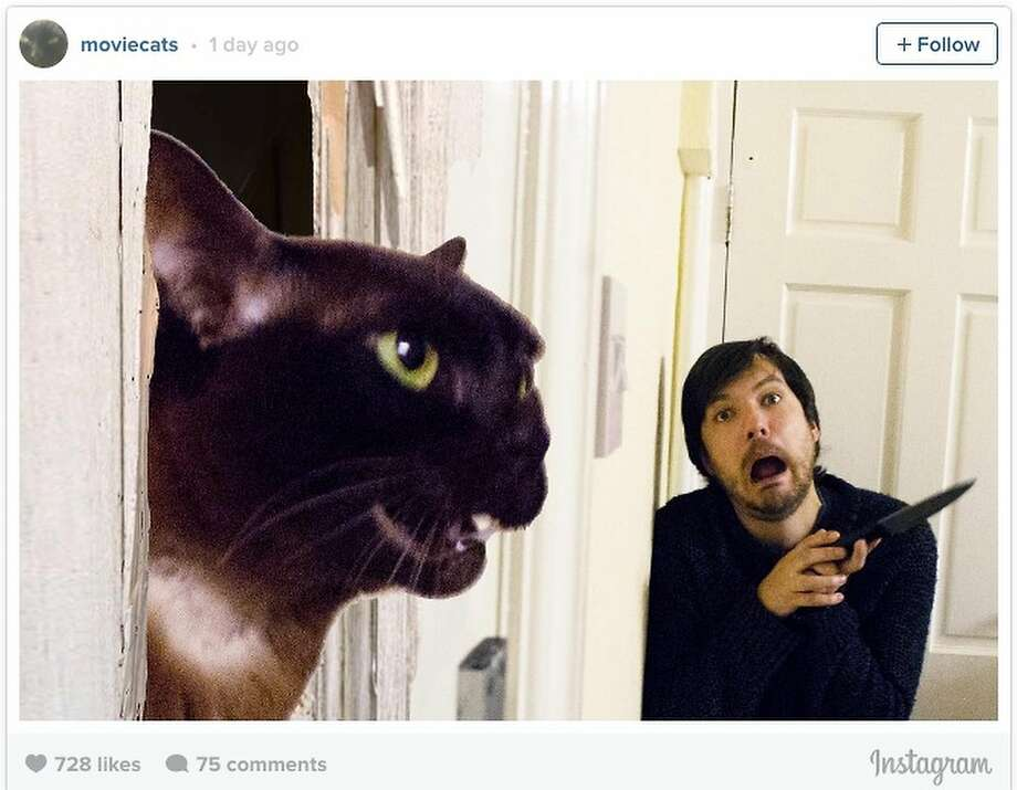 Heeeeeeere's, Johnny! Instagram's moviecats re-creates the famous scene from ...