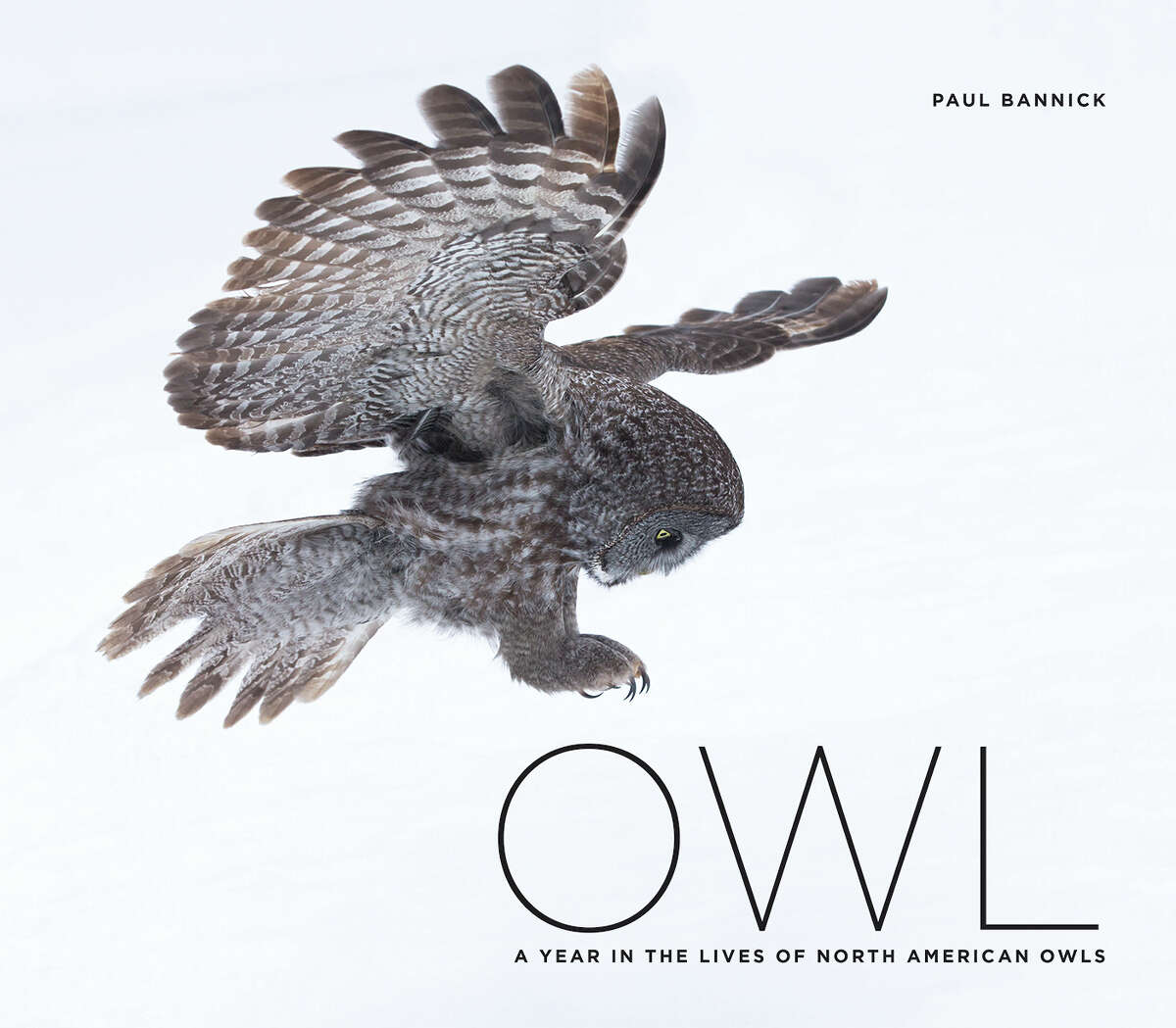 """""""Owl"""" by Paul Bannick"""