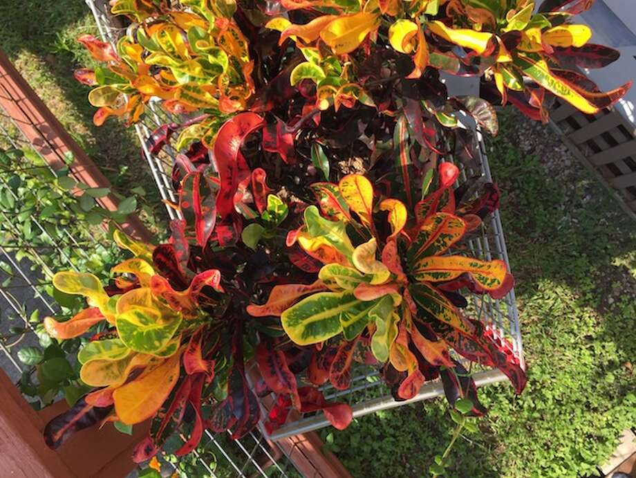 Plants displayed in a grocery card in the front yard. Photo: Lucas Masllorens / Modest Digs