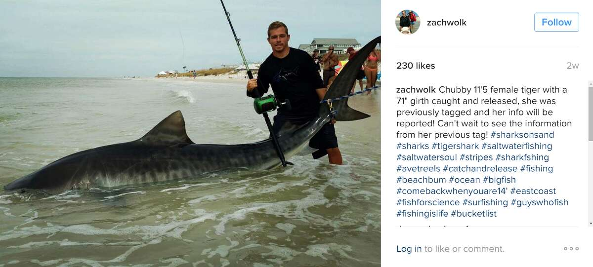 A Texas fisherman recently caught a massive tiger shark with a research tag that revealed it had been tagged by scientists a decade earlier, on the same day. (Zach Wolk on Instagram)