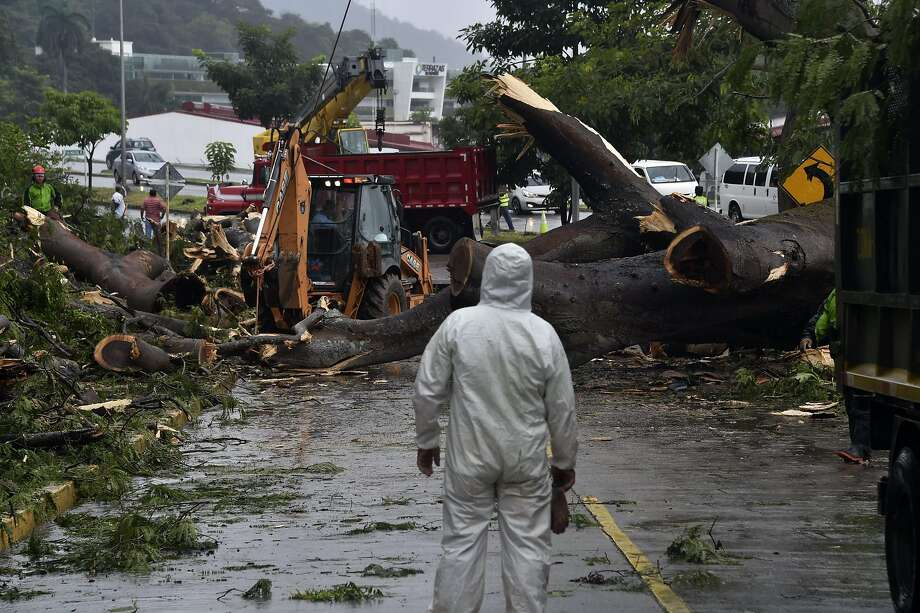 Workers cut a tree that killed a boy when it fell on a car after Tropical Storm Otto hit Panama City. Photo: RODRIGO ARANGUA, AFP/Getty Images