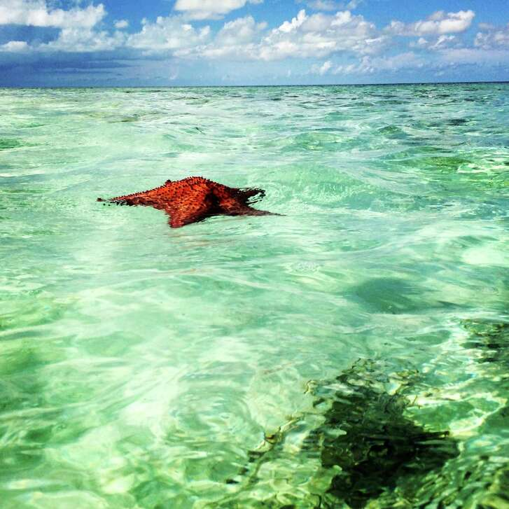 Starfish in South Caicos