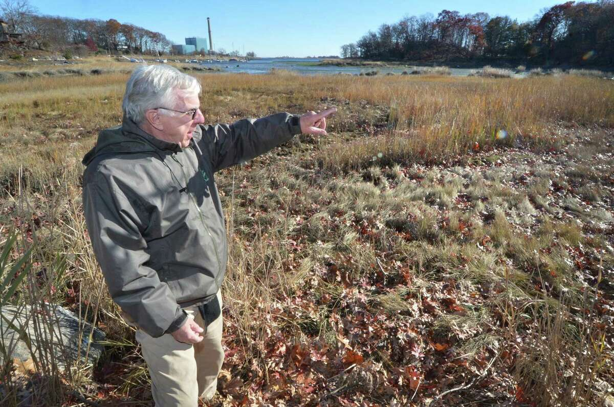 Norwalk Land trust President John Moeling points to a part of the marsh at Village Creek, on Wednesday November 23, 2016 where the Norwalk Land Trust was awarded a $20,000 federal grant to restore salt meadows through a pilot program that will fill the area with dredged material and replace invasive with natives species Original meadow reportedly was destroyed through an effort to cleanup a gas spill that occurred at Manresa Island in 1969 in Norwalk Conn.