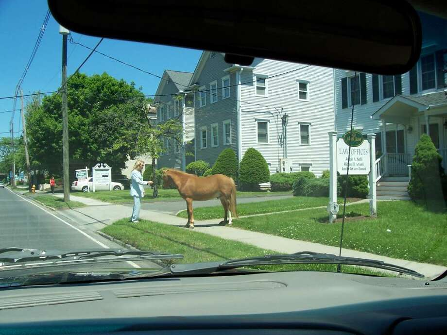 "Danbury Police say they received two calls on Thursday, May 20, 2010, from people saying there was a horse ""roaming loose"" on North Street, a typically busy artery leading to Main Street. Photo: Contributed Photo / The News-Times Contributed"