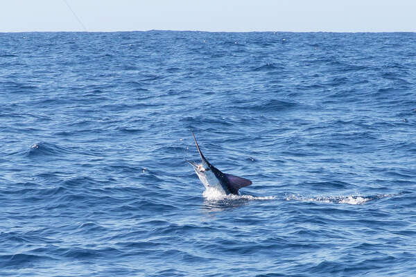 In Cabo San Lucas, fishing for marlin reels in the soul of
