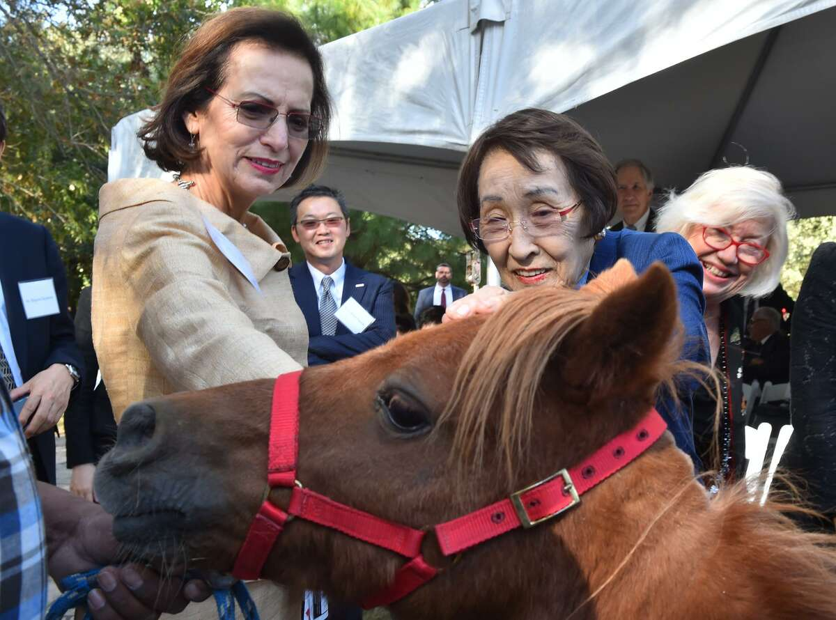 Mary Alice Cisneros (left) and Hiroko Toyoda (center) look over a miniature horse presented to the Toyodas by Jane Macon (right) before the unveiling of a statue to honor Naoko Shirane at the San Antonio Botanical Garden on Monday afternoon.