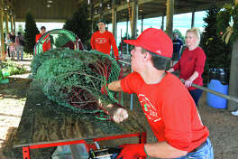 Dylan Singletary wraps up a Fraser Fir at Spring Creek Growers. Hundreds of Christmas trees have been growing at area farms.