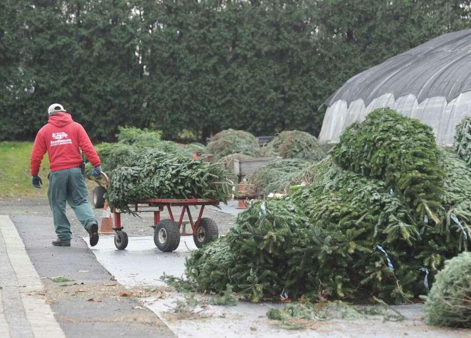Sam Bridge Delivers, Installs Christmas Trees Free In