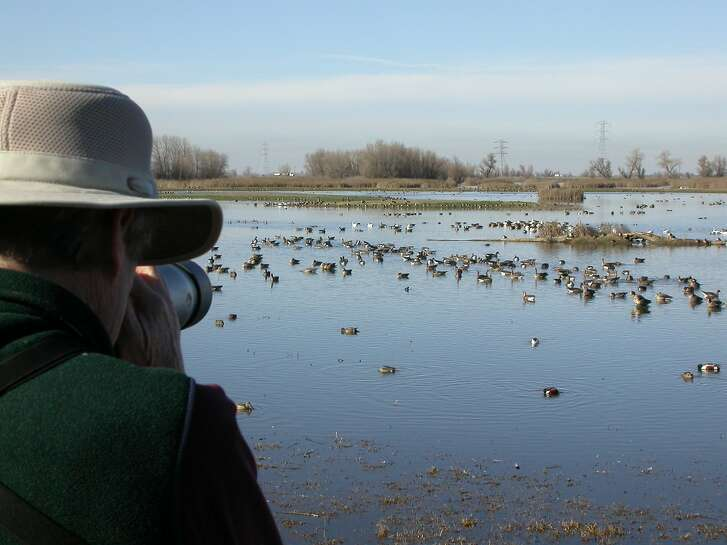 Photographer Andy Lacasse zooms at public viewing deck at Colusa National Wildlife Refuge