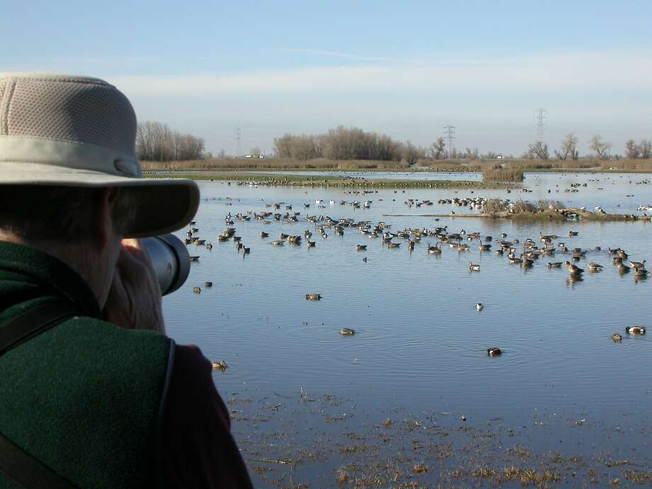 Photographer Andy Lacasse zooms at public viewing deck at Colusa National Wildlife Refuge Photo: Tom Stienstra