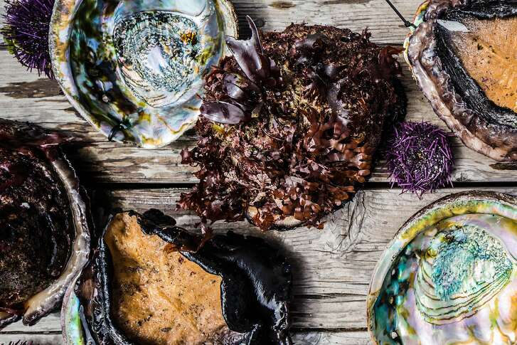 Fresh caught red abalone and purple urchin on the deck at the Little River Inn, Little River, Calif. seen on June, 27, 2016.