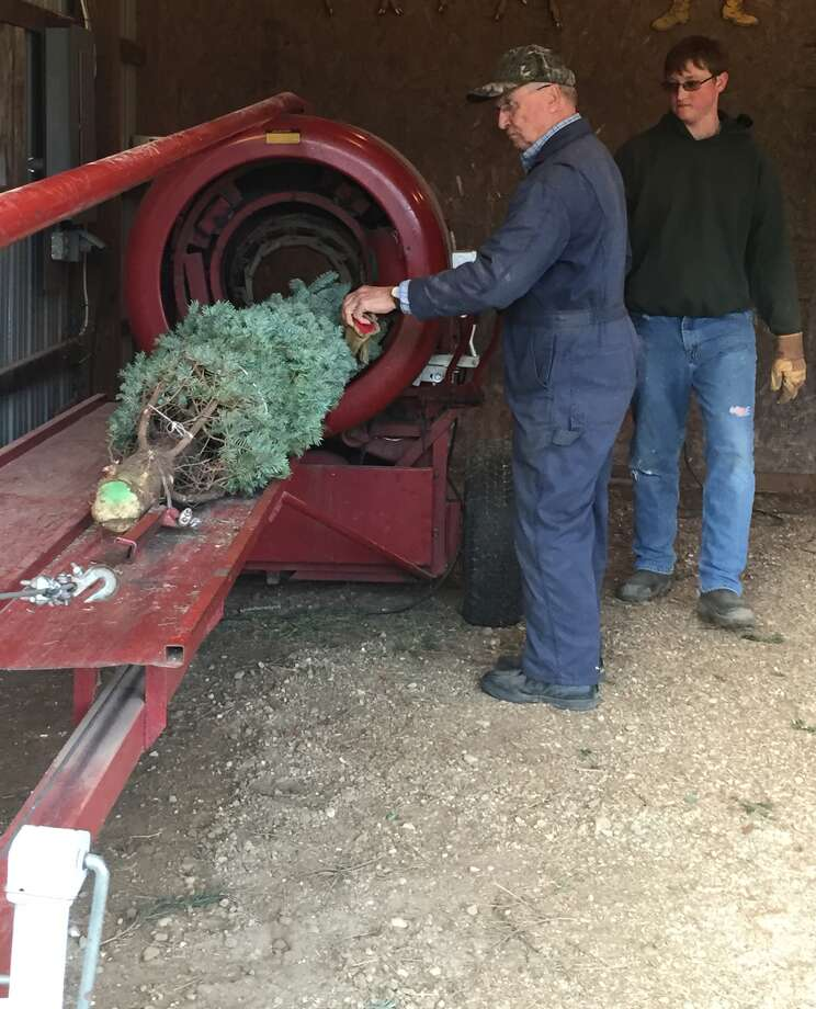 Hillary Cook (left), owner of Cook's Tree Sales in Bad Axe, bales a Christmas tree Wednesday afternoon as employee Jared Rivard walks to the front to grab the wrapped product.