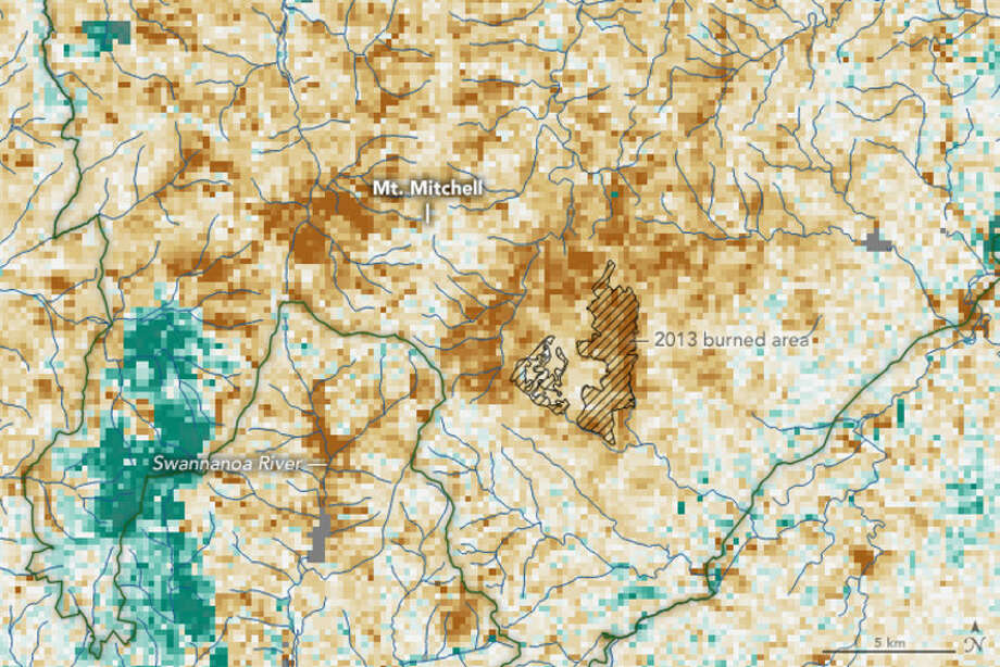 NASA satellite data show the spread of hemlock  decline, caused by an invasive insect called the hemlock woolly adelgid,  near North Carolina's Mount Mitchell in February 2016. Brown areas have  less vegetation than normal for the time of year. Photo: NASA Earth Observatory