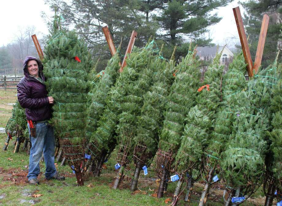 Emily Humiston, owner of Tall Trees Landscaping, helped unload 400 trees at Ambler Farm on Tuesday, Nov. 29, for the annual Holiday Greens Sale. Photo: Stephanie Kim / Hearst Connecticut Media