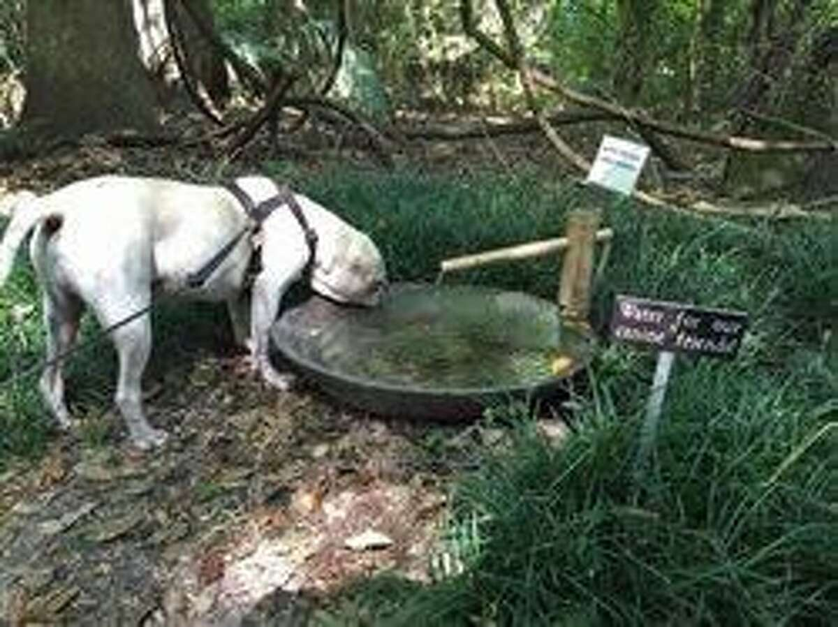 5 reasons to bring your pet on a Gainesville vacation