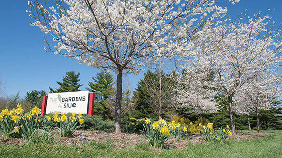 The Gardens at SIUE show their spring blooms.