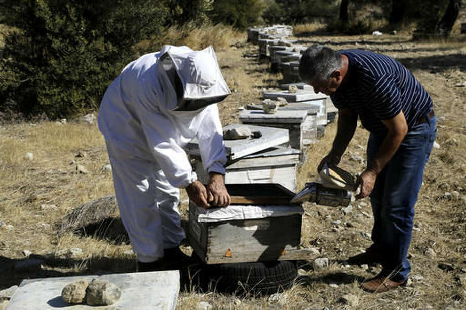 In this photo taken on Monday Oct. 31, 2016, Greek Cypriot beekeeper Soteris Antoniou, left, and Turkish Cypriot friend Kudret Balci work on the beehives in a field outside Mandres at the Turkish Cypriot breakaway northern part of the divided island of Cyprus. Soteris Antoniou and Kudret Balci have resolved to breed a Cypriot queen bee to replace foreign imports that simply can't cope with the ethnically-split island's long, scorching summer months. And in the process, they're showing how the two communities are reaching out to each other for practical solutions to common problems instead of relying on ill-suited, imported fixes. (AP Photo/Petros Karadjias)