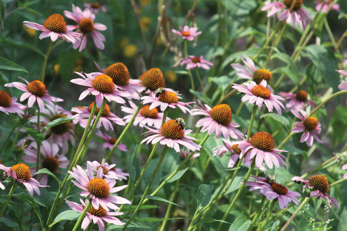 Bees pollinate flowers at the Watershed Nature Center, one of Edwardsville's four special parks.