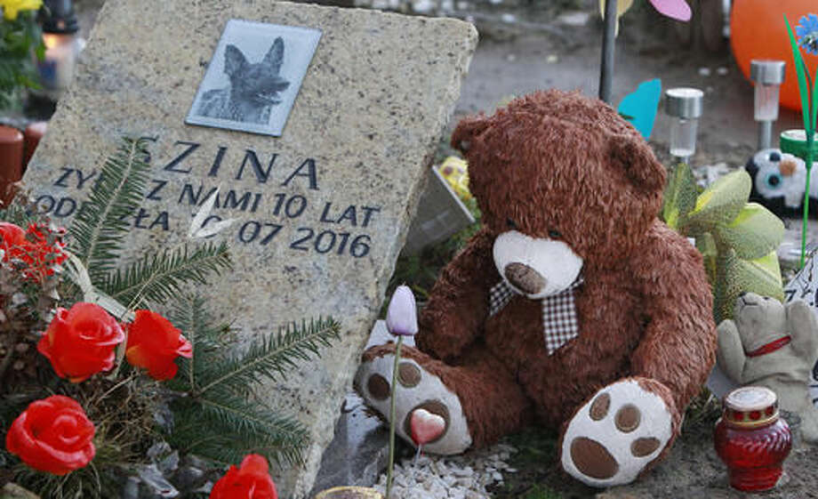 In this photo taken on Sunday, Oct. 30, 2016 a tombstone of a deceased pet dog, Szina, adorns a grave at a special cemetery for animals in Nowy Konik, near Warsaw, Poland, Sunday, Oct. 30, 2016. As Poles remembered their dead on All Saints' Day, a hallowed day in the Catholic calendar, some also remembered their beloved pets.(AP Photo/Czarek Sokolowski)
