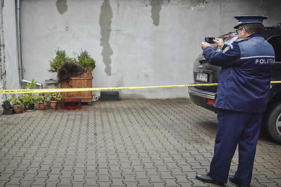 In this Wednesday, Oct. 12, 2016 photo provided by Turnul Sfatului, a policeman takes pictures of a brown bear cub, in SIbiu, Romania. Romanian police opened an inquiry Thursday, Oct. 13, 2016, into the death of a the brown bear, which was shot after it wandered into a city Wednesday before police shot it, sparking outrage among people and wildlife protection organizations, with the country's President Klaus Iohannis criticizing the killing. (Silvana Armat/Turnul Sfatului via AP)