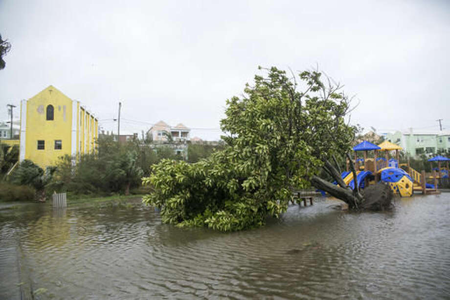 An overturned tree lays on the flooded playground in Mullet Bay, St. Georges, Bermuda, Thursday, Oct. 13, 2016. Hurricane Nicole roared across Bermuda, pummeling the resort island with winds up to 115 mph that snapped trees and peeled off roofs before the storm spun away into open water. (AP Photo/Mark Tatem)