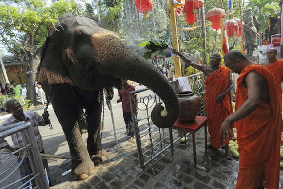 FILE - In this Feb. 24, 2013 file photo, Sri Lankan Buddhist monks bless a domesticated elephant brought for a Buddhist temple festival in Colombo, Sri Lanka. For Buddhists, who make up 70 percent of the island's 20 million population, elephants are believed to have been a servant of the Buddha and even a previous incarnation of the holy man himself. Sinhalese kings rode elephants into battle against invading armies. And every year, colorfully decorated tuskers carry an ornate box containing a replica of one of the Buddha's teeth. (AP Photo/Eranga Jayawardena, File)