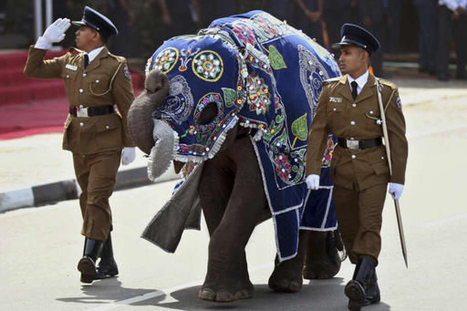 FILE - In this May 19, 2015 file photo, Sri Lankan police officers march with a ceremonially dressed elephant calf during a Victory Day parade in Matara, about 165 kilometers (103 miles) south of Colombo, Sri Lanka. The use of baby elephants in parades is proof that Sri Lankans have been flouting a decades-long ban on capturing the animals in the wild, experts say. Even as the country cracks down on illegal ownership, the enduring demand for elephants has the government planning to set up its own pool of captive animals to be hired out to temples for ceremonies and maintained with budget funds. (AP Photo/Nishan Priyantha, File)