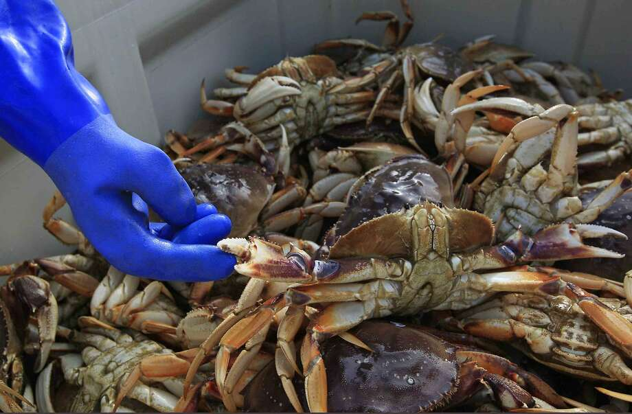 Fifty more miles of coast will open to commercial crab fishing. Photo: Jessica Christian, The Chronicle