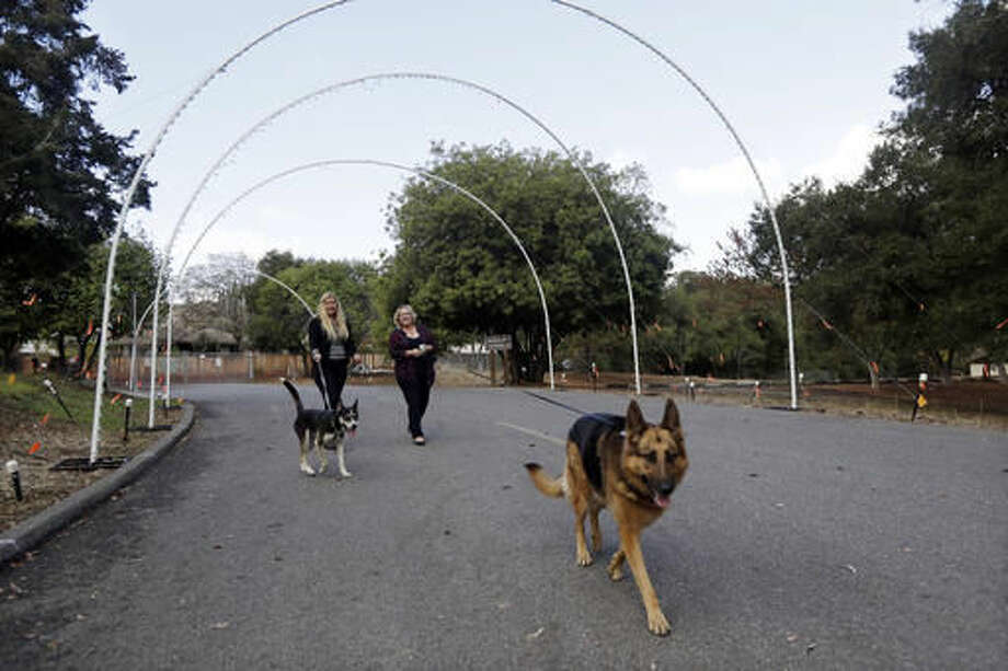 In this Monday, Oct. 17, 2016, photo, Marianne O'Connor, right, CEO of Sterling Communications, center, and employee Madeline Mains take their dogs Kaia, right, and Bowie for walk in the neighborhood near their office, in Los Gatos, Calif. (AP Photo/Marcio Jose Sanchez)