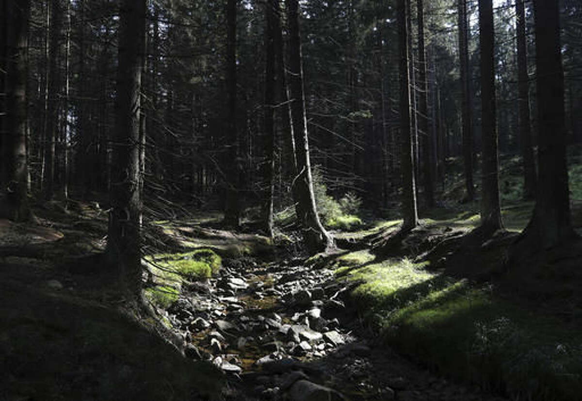This picture taken on Friday, Sept. 23, 2016, shows a view of a creek in the Brdy reserve in Brdy, Czech Republic. A former military zone near Prague which the army used to do artillery training has been turning into a protected nature reserve and opening to the public after almost a century with a big politics decision behind it. (AP Photo/Petr David Josek)