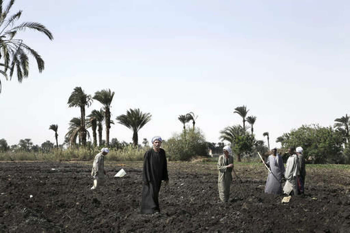 In this Wednesday, Oct. 19, 2016 photo, farmers prepare to plant sugar beet seeds in Beni Suef 75 miles, 120 kilometers, south of Cairo, Egypt. Egypt hopes to attract much needed investment when it unleashes market forces with devaluation and subsidy cuts aimed triggering an IMF bailout and ensuing investor confidence. But fears of a backlash from a public already straining under high inflation and unemployment are growing, threatening to undermine the tenuous stability President Abdel-Fattah el-Sissi has forged over the past two years with a heavy hand. (AP Photo/Nariman El-Mofty)