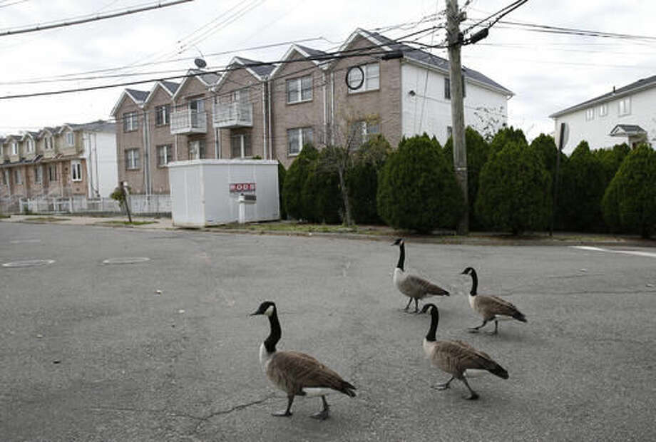 In this Tuesday, Oct. 25, 2016 photo, a flock of Canada geese waddle past houses slated for demolition on an abandoned street in the Oakwood neighborhood of Staten Island, in New York. Nearly four years ago Superstorm Sandy's deadly floodwaters coursed through the streets. Oakwood Beach, improbably built on a salt marsh, is slowly being returned to nature after state officials concluded it would be foolish to rebuild in a place with so little protection from the sea. Under a state buyout program, 196 homes have been demolished so far. Another 103 will soon meet the same fate. (AP Photo/Kathy Willens)