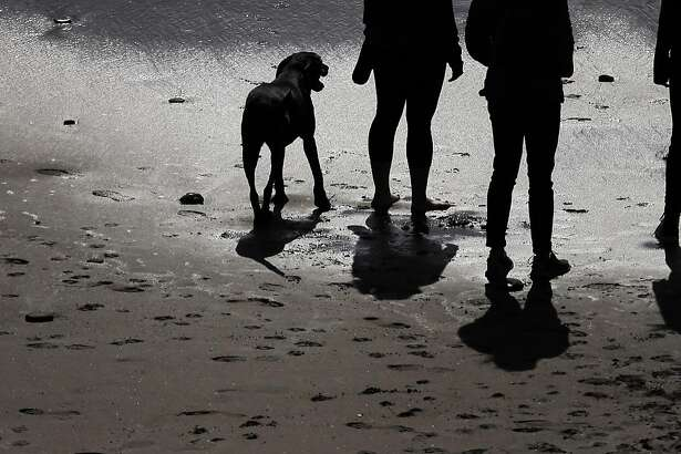 The Wong family walks on the beach with Kona  as they and others enjoy the area at Fort Funston in San Francisco, Calif., on Tuesday, March 22, 2016. The National Park Service has proposed plans to restrict off-leash access for dogs in some parts of the GGNRA, eliminating them in San Mateo County.